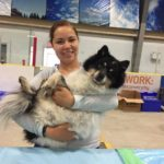 319 surgeries completed during large scale spay/neuter clinics in RMWB