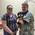 FMSPCA completes 300 surgeries in their shelter clinic